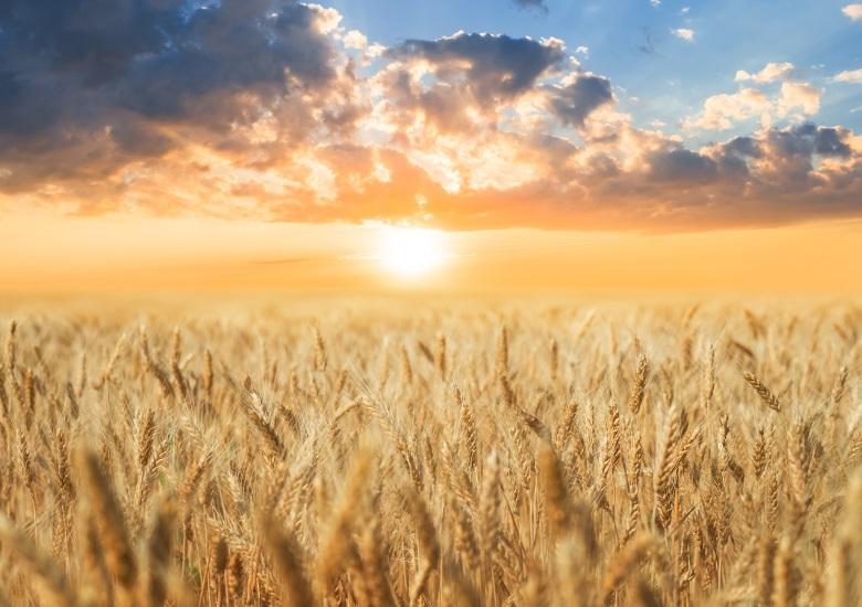 Le FEADER soutient notamment la viabilité et la compétitivité de l'agriculture européenne