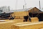 Interdiction du bois illégalement exploité