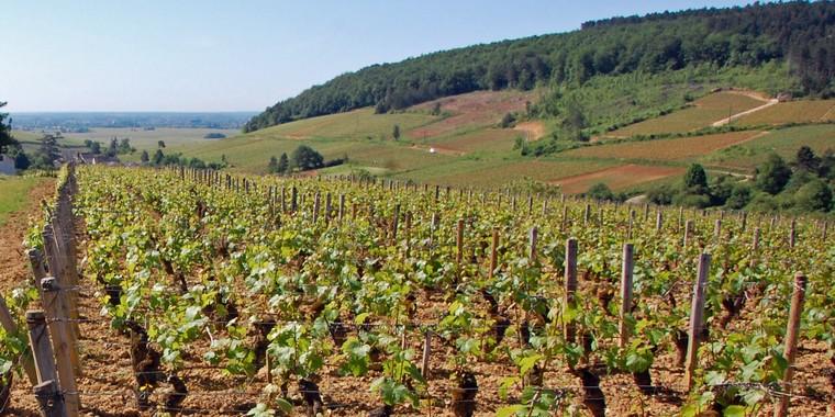Bourgogne : Paysage de vignes en Bourgogne près de Echevronne