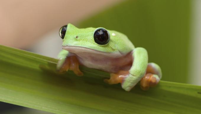 Protection de la biodiversité : que fait l'Europe ?