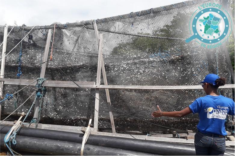 Des filets ont été installés autour des bassins pour protéger la production des prédateurs